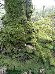 180px-Dripping_with_moss_-_geograph.org.uk_-_681602 Jonathan Billinger WC